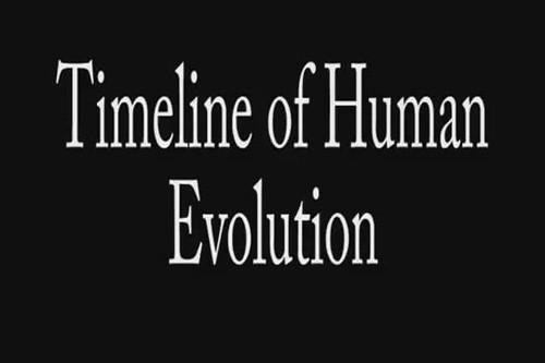 Insan evriminin gelişimi