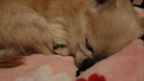My snoring Angel