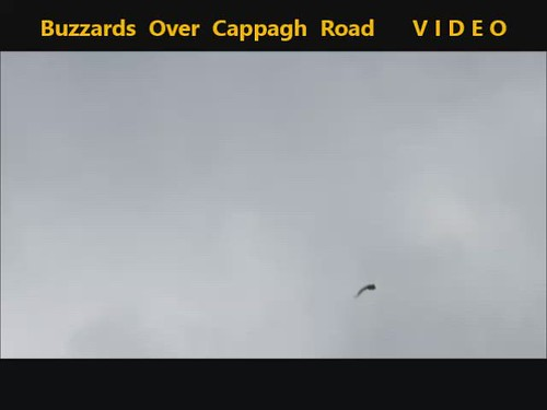 Buzzards Over Cappagh Road 13-08-2019