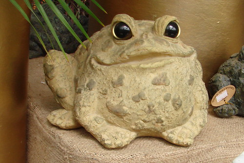 Tammy Toad
