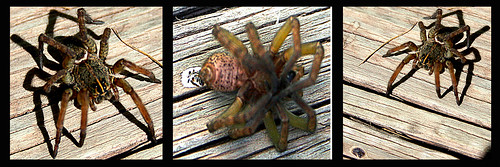 Anthrophobia - fear of people  = Arachnophobia - fear of spiders