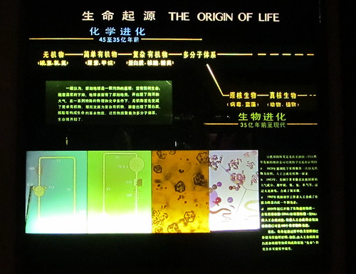 The Origin of Life Display