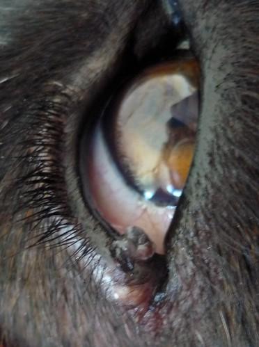 Erfahrung Lipom Hund Moonpotatolife