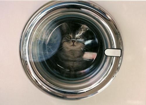 catsmonaute \ catsmonot