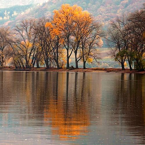 2010 10 31 Autumn leaves leave 4