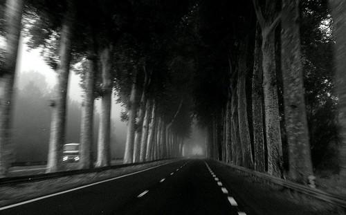 Evil Tree Empire III - Truck Lurking Hazards