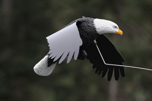 Bald eagle scarcrow
