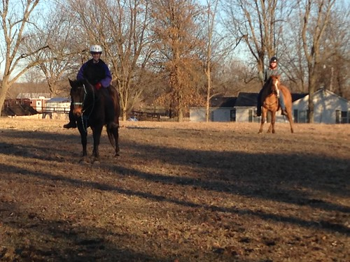Micah (4 year old sorrel) begins training with Phil (senior bay) in upper pasture, let's w a l k! :) Yay team!