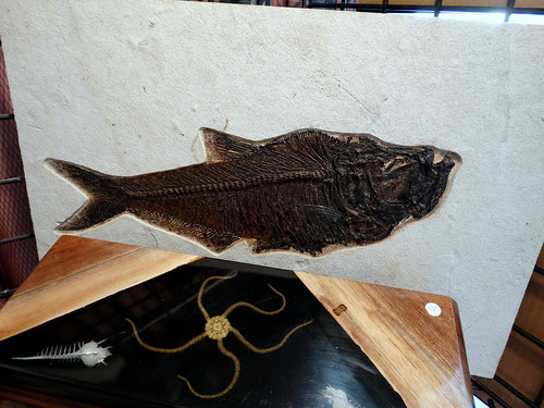 20160129 Fish Fossil front view