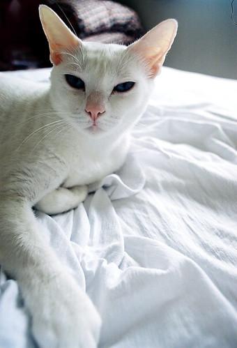 mia na cama por henrique martin.