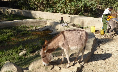 Whole families and their animals come to get water from the USAID-supported Gamad watershed.