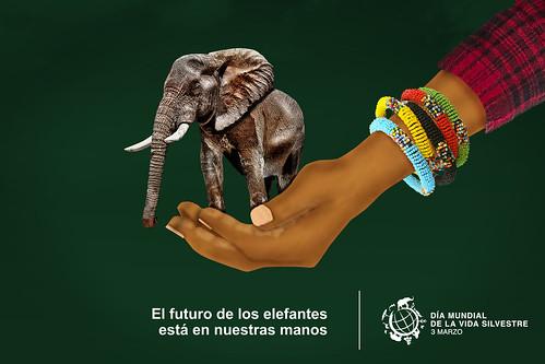 World Wildlife Day 2016 poster