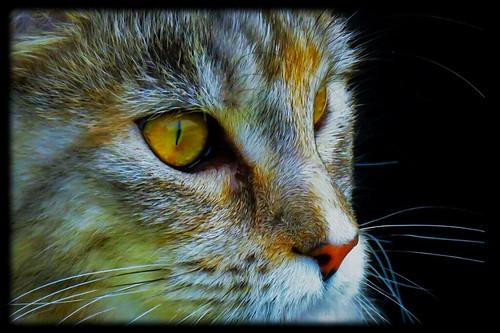 In der Nacht sind alle Katzen grau - alle?