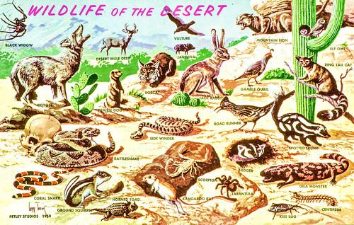 Wildlife of the Desert
