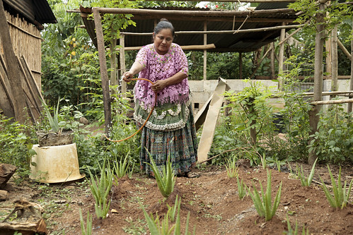Guatemala - Rural Women Diversify Incomes and Build Resilience