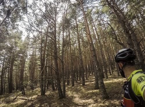 És maco i està al bosc mateix, però el camí em sembla perillós per la bici - Etapa 1 Pedals de Foc en solitari