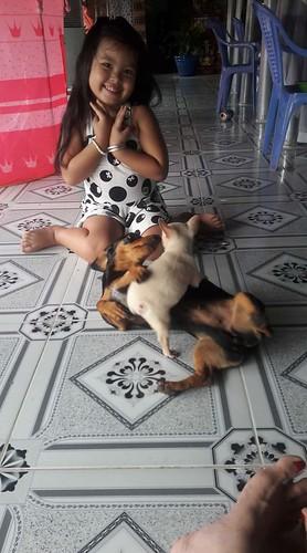 Chó kiểng Tiền giang: Chihuahua, Poodle, Lạp xưởng, Pug