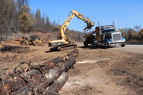 Utilities Workers clearing hazard trees