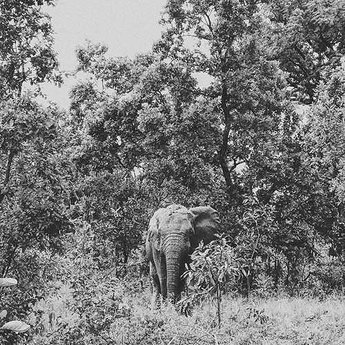 """Love will draw an elephant through a key hole"" - Samuel Richardson - . Had a privilege to travel to #ghana and witnessed some majestic #elephants in the wild. Unmanned, untangled, uncaged. Just doing a regular morning stroll 👍 Thanks @paper_cran"