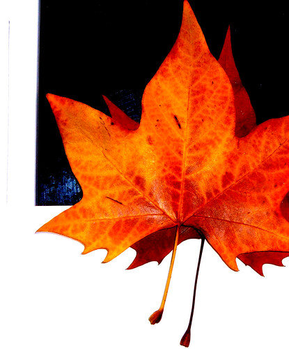 Outono 03