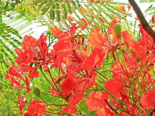 blooms along the way . . . scarlet
