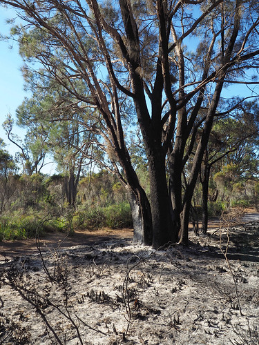 Mosaic Burn 2018 – Red Moon Sanctuary, Redmond, Western Australia