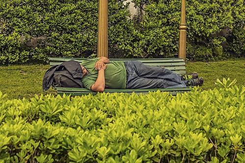 La fiebre verde trae pobreza.