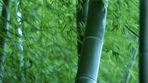 Eine-Bambusstange-und-eine-Bambusfloete-