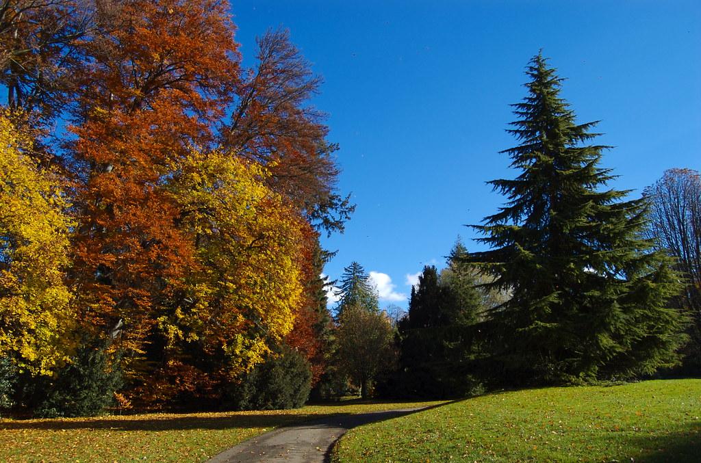 Autumn in Genève