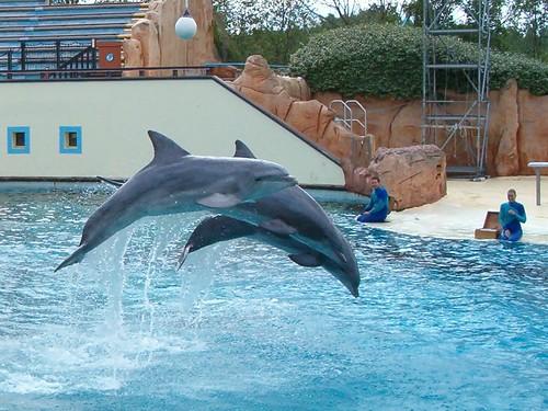 Dolphins show - Parc Asterix