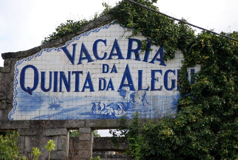 Oliveira do Douro 132