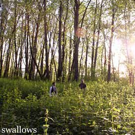 Swallows-Me With Trees Towering