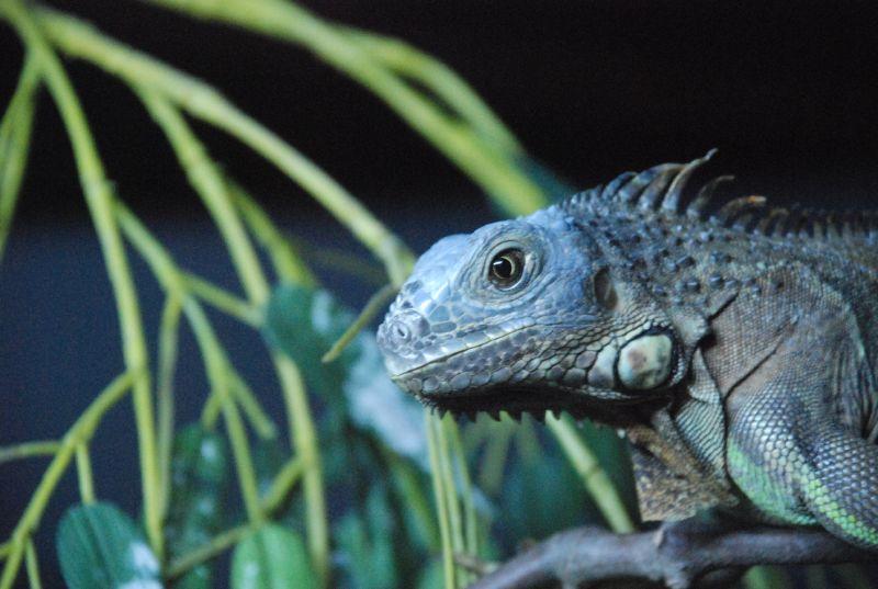 Zoo Maia 022