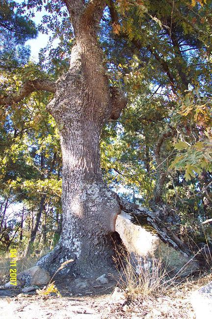 Árvore em Valdanta