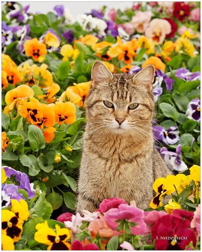 Kolorful Kitty 0914-09