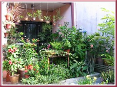 Our tropical garden delights - combination of foliage and flowering plants, Sept 22 2009