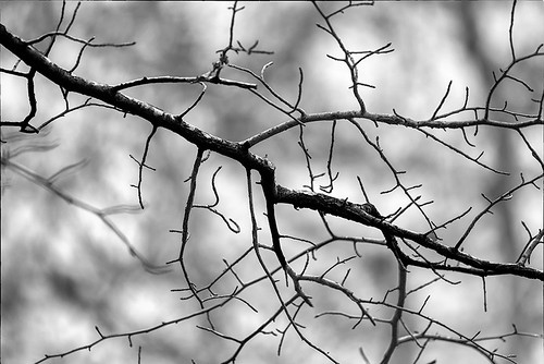 Limbs and Branches 2017 01 B&W