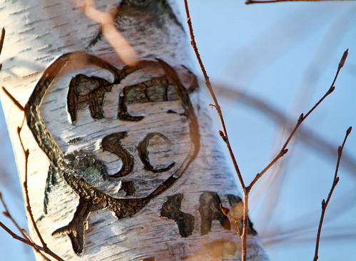 Old Carved Heart on Birch