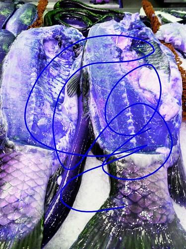 Blue Salmon Picasso
