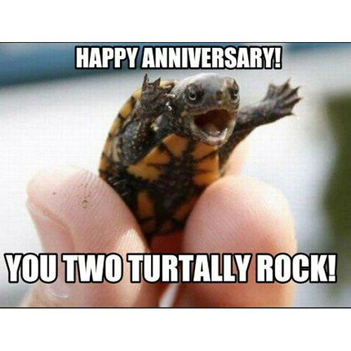 Happy anniversary you 2 love turtles 😂😂😂 love you both. God Bless You both and the family. Much love Your Favorite Brother. El Pescado @qban_ma @mrko912