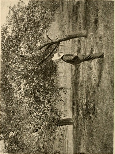 Image from page 61 of