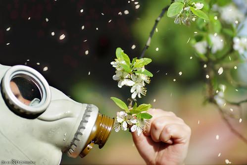 Laat ons een bloem en wat gras dat nog groen is, laat ons een boom en het zicht op de zee vergeet voor één keer hoeveel geld een miljoen is, de wereld die moet nog een eeuwigheid mee (lyrics by Louis Neefs)