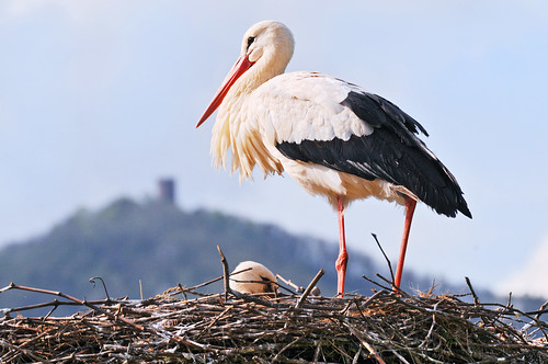Stork and castle