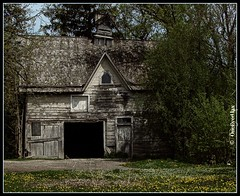 Genesee Barn (OneEyedJax) Tags: wisconsin barn rural cat decay rustic kitty loveit cupola weathered decayed dandelions smorgasbord blueribbonwinner supershot waukeshacounty platinumphoto aplusphoto geneseedepot excellentphotographersaward brillianteyejewel betterthangood theperfectphotographer