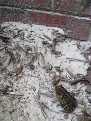 Frog set free