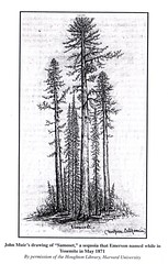Muir's Sketch of Samoset