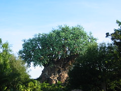 IMG_0703 (Andy961) Tags: orlando florida fl waltdisneyworld treeoflife disneysanimalkingdom