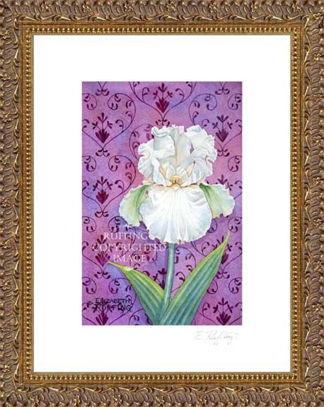Valentine Pale Pink Iris by Elizabeth Ruffing Framed Print