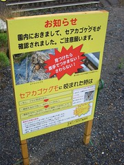 毒クモ注意