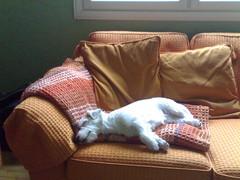 Silloin, kun en ole ulkona, olen usein sohvalla makoilemassa.